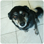 It's official - meet my new dog, Abitibi thumbnail