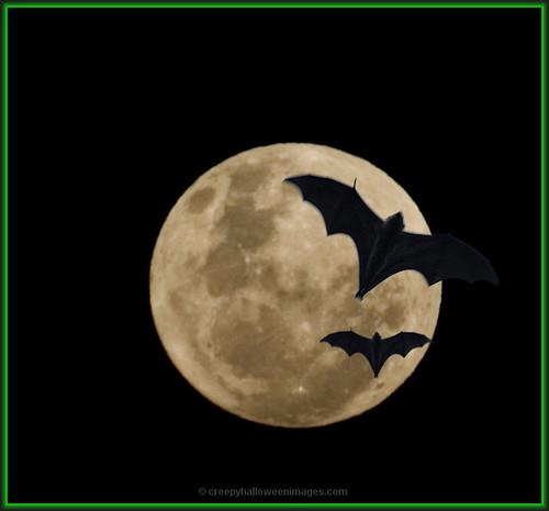 full moon, bats