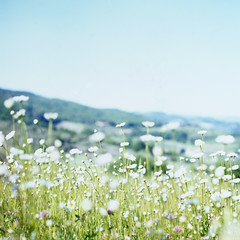 daydream* (miki**) Tags: pink flowers italy white green 120 yellow little toscana daydream pentaconsixtl pontassieve