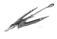 Rhamphorynchus gemmingi _ jconway