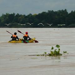 ---v--- ------- ---V--- ------- ---v---- ---V--- (B℮n) Tags: topf50 greategret mekongriver 4000islands southernlaos kayaktrip greatwhiteegrets 50faves sipandon irrawaddydolphins cambodianborder highlyendangeredspecies grotezilverreigers kayakingtour thelowermekong downstreaminkratiecambodia veryhardtospotthem thewetlandsofsipandoninlaos greatwhiteegretsflyingover greategretsinline laoswildlifeatitbest laosdolphinconservationfund wildlifeoflaos shallowwaterofthemekong loudcroaking themekongfaultline peddlingonthemekongriver