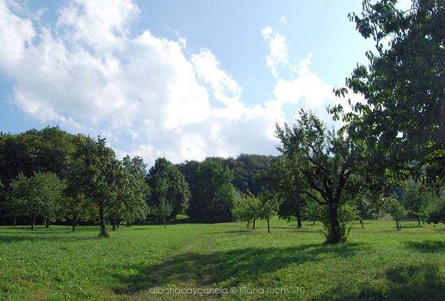 Swiss field