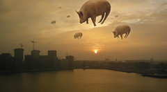 Celestial Swine at Sunrise (Bart van Damme) Tags: animals skyline sunrise haze rotterdam surrealism thenetherlands pinkfloyd cranes inflatable badge pigs swine maas kopvanzuid drift hoovering wilhelminapier brienenoordbrug katendrecht rijnhaven rivermeuse bartvandammephotography bartvandammefotografie emailbagtvandammegmailcom