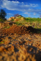 Ant Hill CSU Thurgoona (heritagefutures) Tags: building closeup university ant low australia charles soil level ants mound sciences anthill sturt antheap envronmental thurgoonansw