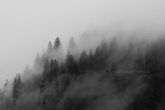Land of mist and ice (PaolaFrancia) Tags: mist mountains forest nebbia montagna foresta