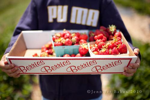 Berries Berries Berries Berries