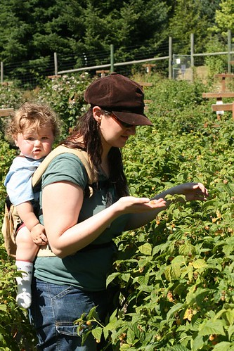 picking berries with baby in the ERGO carrier