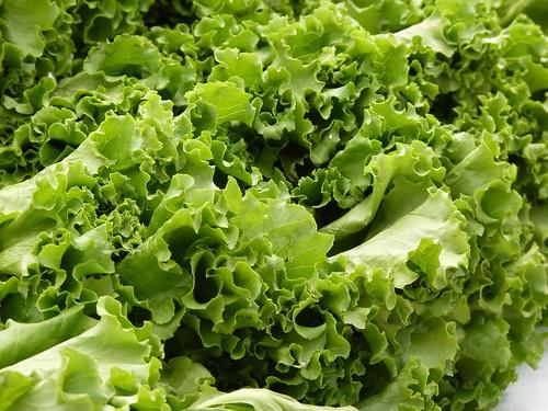 フリー写真素材, 食べ物・飲料, 野菜, レタス, グリーン,