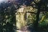 (.ultraviolett) Tags: wood light film 35mm olympus mjuii olympusmjuii