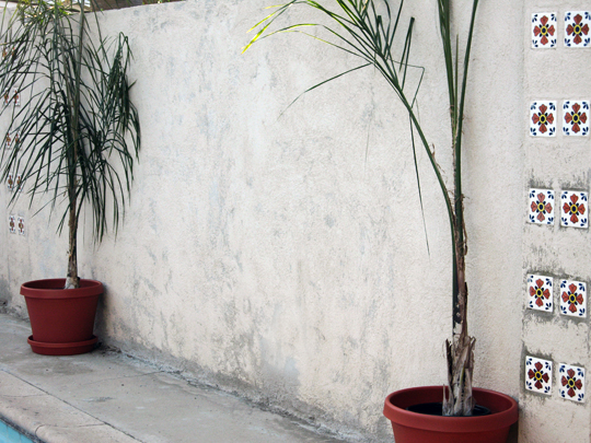 backyard palm trees