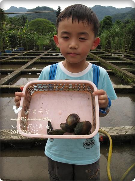 大溪摸硯農場42-2010.06.20