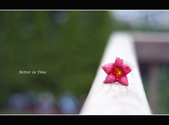 Better in Time (mariosworld343) Tags: flowers abstract 50mm nikon time f18 borders boken fifty blooming nifty d90