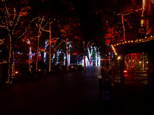 Cedar Point - Starlight Experience Fall