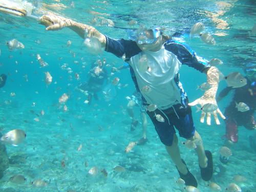 netting spottail pinfish