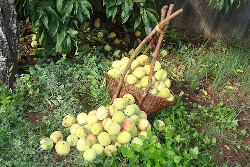 My Peaches
