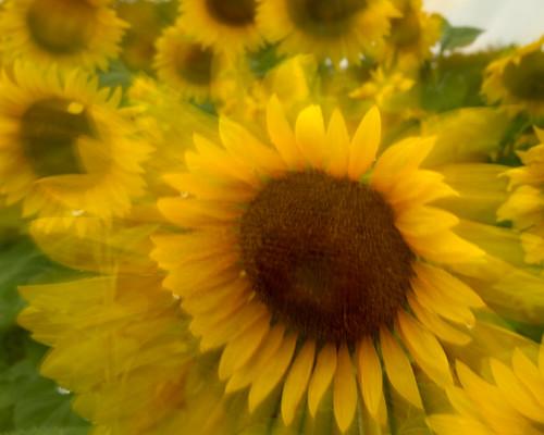 IMAGE: http://farm5.static.flickr.com/4115/4781312868_c82675759e.jpg