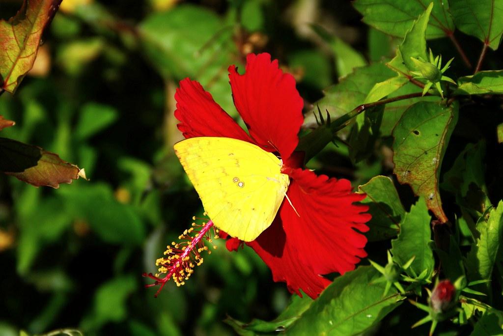請問單眼如何拍出漂亮的火紅與艷黃色呢?