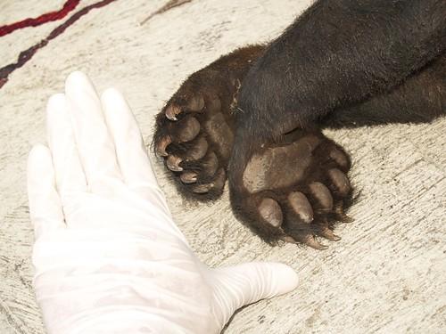 Fauna silvestre y conflictos con el humano VI