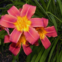 Summer Beauty #2 (bill.fu) Tags: flower colorful 100views bloom fu 2010 naturesfinest bej