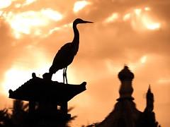 China ist nicht weit. (Postsumptio) Tags: sky bird animal silhouette clouds reflections germany landscape evening europe crane frankfurt againstthelight fiveelements chinesischergarten timeofday bej watershu