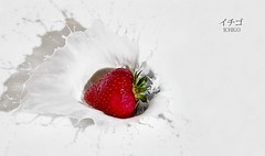 Summer Splash (edmundlwk) Tags: red summer white macro fruit recipe milk strawberry berry fresh shutter splash ichigo speedlite 430ex canon100mm strobist canon7d