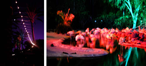 Zoo Night Collage