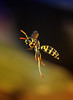 cutie wasp flying (aziouezmazouz) Tags: macro insect amazing colours searchthebest bokeh ngc cutie beautifulscenery bellissima vibrantcolours greatphotographers canon100mm specanimal macromarvels stunningsupershot elitephotographers greaterphotographers sunofgodphotographer ultimatephotographers