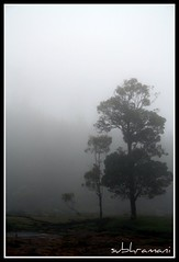 Pikara Falls - Ooty