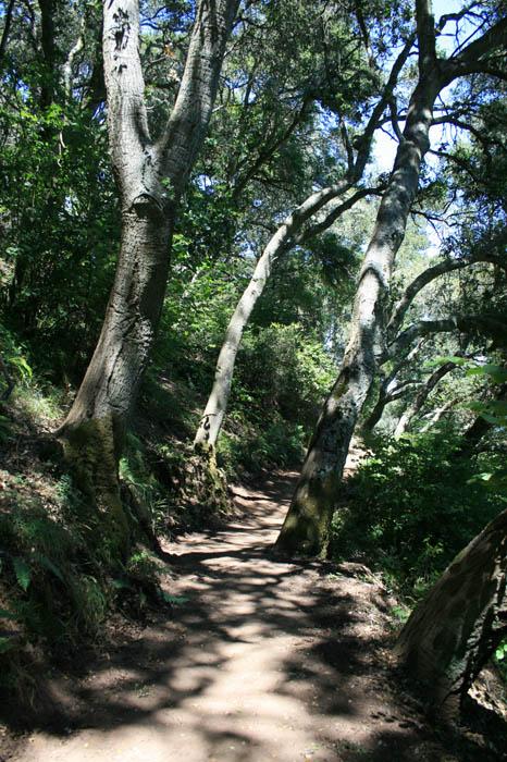 Angel Island Scout Trip (106)