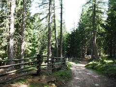 Sentiero nel BletterBach Photo