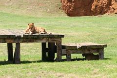 IMG_0574 (Javier Senz,SANTA) Tags: zoo avestruz cantabria gorila osos jirafa cabarceno