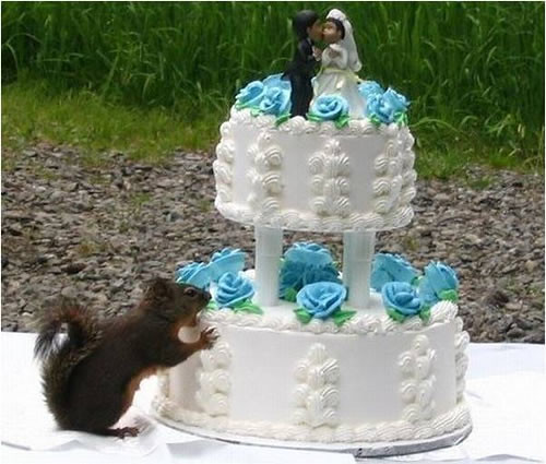 squirrel-wedding-cake