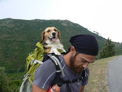 Corsica (Roby-da-matti) Tags: trip travel dog mountains beagle nature cane montagne trekking hiking corse corsica natura viaggio nessie disabili arto protesi camminata disabile robertobruzzone robydamatti