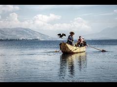 Cormorant fishing birds (Kaj Bjurman) Tags: china lake bird cormorants eos fishing fisherman 5d cormorant yunnan dali hdr kaj mkii markii cs4 photomatix bjurman