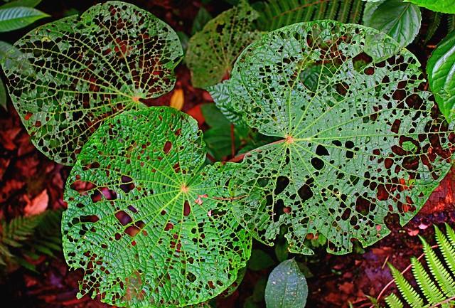 3 leaves c