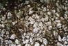 (drl.) Tags: cemetery montana rocks purged purge237