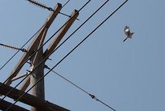 To Kill A Mockingbird (twm1340) Tags: county trip travel lines electric downtown texas tour power tx falls adventure wires rv wichita motorhome mockingbird 2010 hightension sps 0102