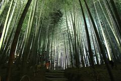 Stairway to Heaven (Marquisde) Tags: japan night forest garden temple lights kyoto shrine buddhist steps bamboo nighttime magical kodaiji kodaitemple canonefs1585mmf3556isusm