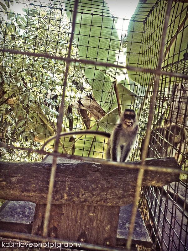 marah monkey
