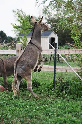 04_donkey_hop
