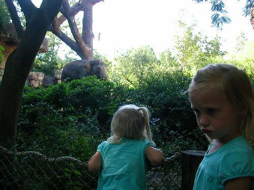 July 31 2010 Zoo Shanna Haley