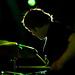 Drummer - Pritty Green