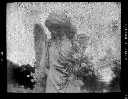 Angel Negative
