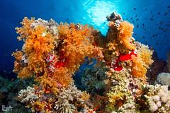 Have a nice week (Lea's UW Photography) Tags: underwater redsea egypt fins unterwasser tiran tokina1017mm canon7d leamoser
