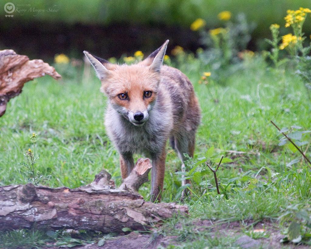 Fox: 215/365