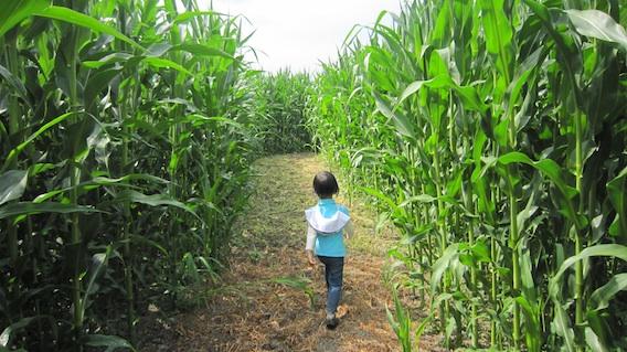 Meadows Maze