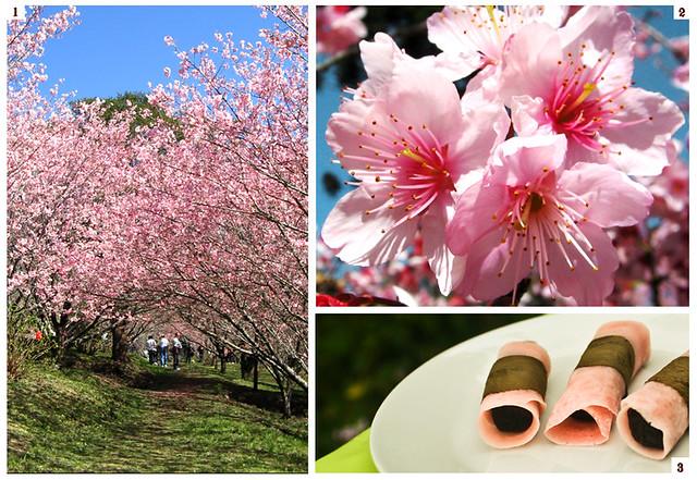 42ª Festa da Cerejeira em Flor
