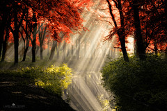 that same other world (larsvandegoor.com) Tags: autumn trees red reflection tree green fall water netherlands colors forest surreal foliage rays sunrays  leafs magical  colrs     larsvandegoor bealivebetopbeseven   rememberthatmomentlevel1