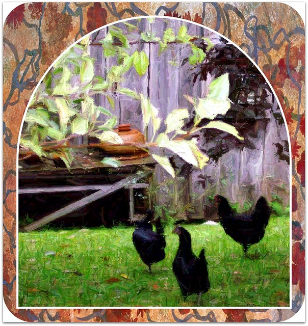 Roosters and wives