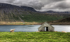 The Sheep and the Lonely House (Stuck in Customs) Tags: world travel wild mountain mountains cold green june clouds digital landscape island photography iceland blog high scenery europe sheep dynamic stuck natural cloudy hiking shed scenic overcast stormy hike photoblog hut valley software processing fjord imaging isolation lonely shack distance solitary range hdr isolated grazing tutorial trey sland travelblog customs 2010 icelandic northatlantic midatlanticridge ratcliff hdrtutorial stuckincustoms sheepshed treyratcliff photographyblog stuckincustomscom nikond3x